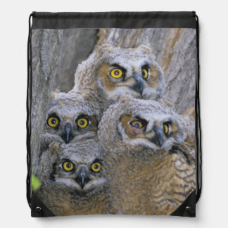 Great Horned Owlets (Bubo virginianus) nest in a Drawstring Backpack