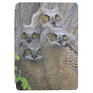 Great Horned Owlets (Bubo virginianus) nest in a iPad Air Cover