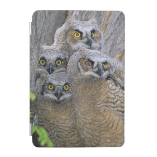 Great Horned Owlets (Bubo virginianus) nest in a iPad Mini Cover