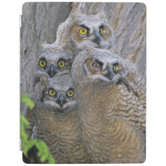Great Horned Owlets (Bubo virginianus) nest in a iPad Smart Cover