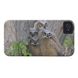 Great Horned Owlets (Bubo virginianus) nest in a iPhone 4 Case-Mate Case