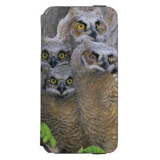 Great Horned Owlets (Bubo virginianus) nest in a iPhone 6/6s Wallet Case