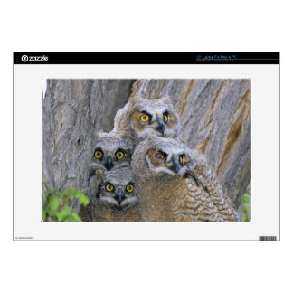 Great Horned Owlets (Bubo virginianus) nest in a Laptop Decal