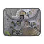 Great Horned Owlets (Bubo virginianus) nest in a MacBook Pro Sleeves