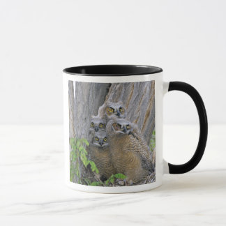 Great Horned Owlets (Bubo virginianus) nest in a Mug