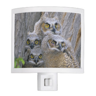 Great Horned Owlets (Bubo virginianus) nest in a Night Light