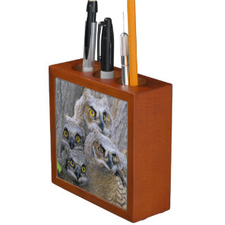 Great Horned Owlets (Bubo virginianus) nest in a Pencil Holder