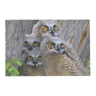 Great Horned Owlets (Bubo virginianus) nest in a Placemat