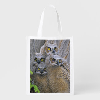 Great Horned Owlets (Bubo virginianus) nest in a Reusable Grocery Bag