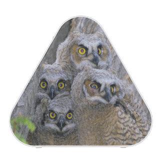 Great Horned Owlets (Bubo virginianus) nest in a Speaker