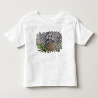 Great Horned Owlets (Bubo virginianus) nest in a Toddler T-shirt