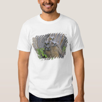 Great Horned Owlets (Bubo virginianus) nest in a Tshirts