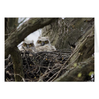 Great Horned Owls Card
