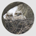 Great Horned Owls Classic Round Sticker