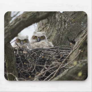Great Horned Owls Mouse Pad