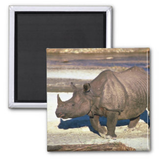 Great Indian One-Horned Rhino Fridge Magnets