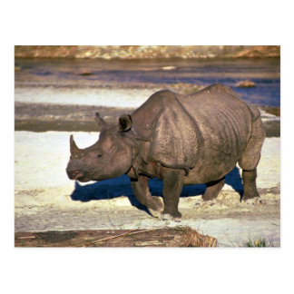 Great Indian One-Horned Rhino Postcard