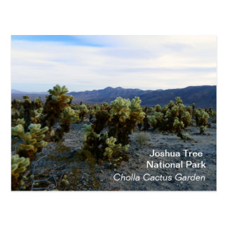 Great Joshua Tree Postcard! Postcard