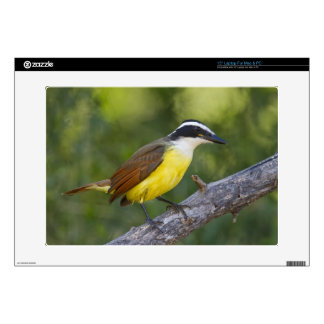 "Great Kiskadee adult perched 15"" Laptop Decal"
