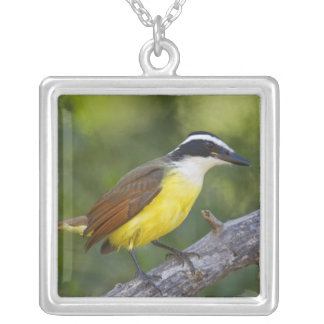 Great Kiskadee adult perched Silver Plated Necklace