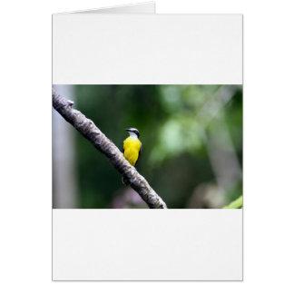 Great Kiskadee bird Amazon rain forest Card
