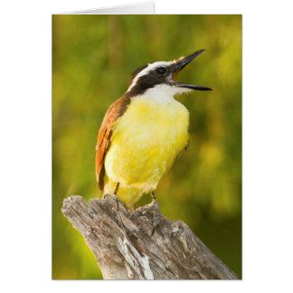 Great Kiskadee calling from perch Card