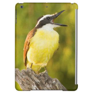 Great Kiskadee calling from perch iPad Air Covers
