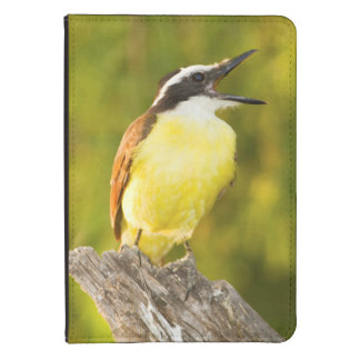 Great Kiskadee calling from perch Kindle Cover