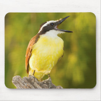 Great Kiskadee calling from perch Mouse Pad