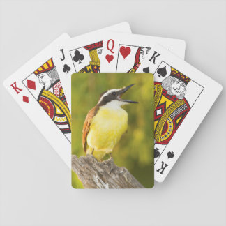 Great Kiskadee calling from perch Playing Cards