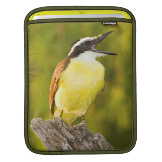 Great Kiskadee calling from perch Sleeve For iPads