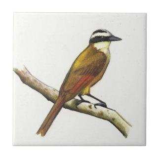 Great Kiskadee in Color Pencil: Bird: Wildlife Tile