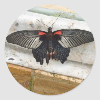 Great Mormon Butterfly Classic Round Sticker