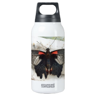 Great Mormon Butterfly Insulated Water Bottle
