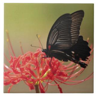 Great Mormon (Papilio memnon) on flower, Chiba Ceramic Tile