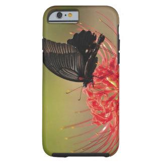 Great Mormon (Papilio memnon) on flower, Chiba Tough iPhone 6 Case