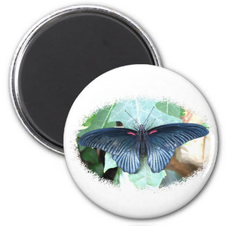 Great Mormon-Tropical Butterfly 2 Inch Round Magnet