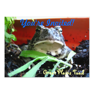 Great Plains Toad Card