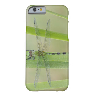Great Pondhawk , Erythemis vesiculosa, adult Barely There iPhone 6 Case