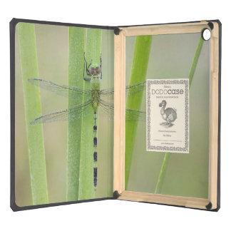 Great Pondhawk , Erythemis vesiculosa, adult iPad Air Cover