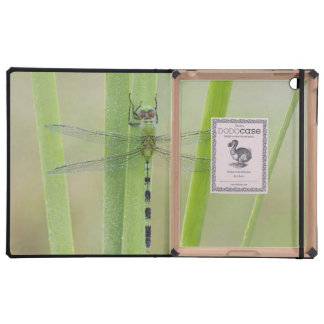 Great Pondhawk , Erythemis vesiculosa, adult Cover For iPad
