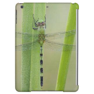 Great Pondhawk , Erythemis vesiculosa, adult iPad Air Case