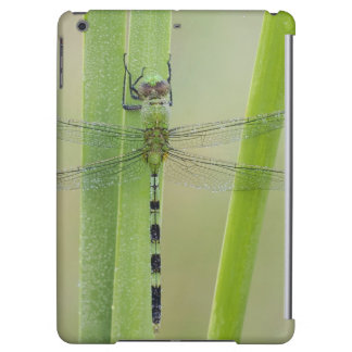 Great Pondhawk , Erythemis vesiculosa, adult Cover For iPad Air