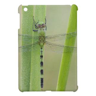 Great Pondhawk , Erythemis vesiculosa, adult iPad Mini Case