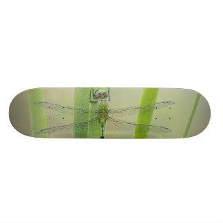 Great Pondhawk , Erythemis vesiculosa, adult Custom Skateboard