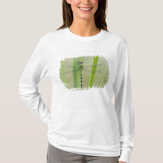 Great Pondhawk , Erythemis vesiculosa, adult T-Shirt