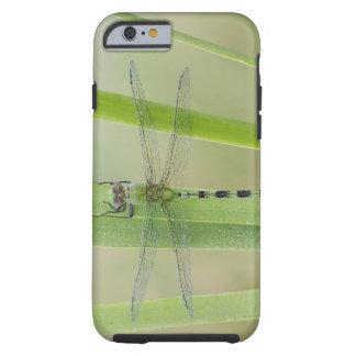 Great Pondhawk , Erythemis vesiculosa, adult Tough iPhone 6 Case