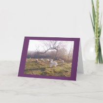 Great Pyr and Flock Card