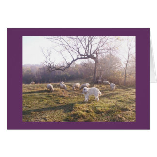 Great Pyr and Flock Greeting Card