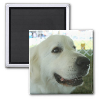 Great Pyrenees 2 Inch Square Magnet